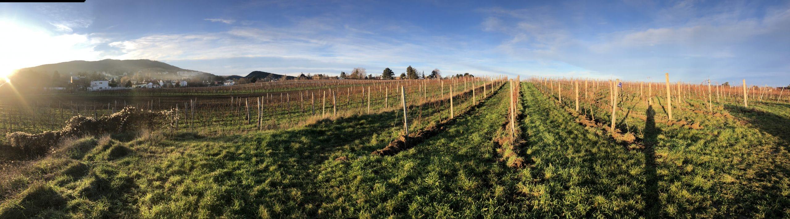 Wohnen im Weingarten